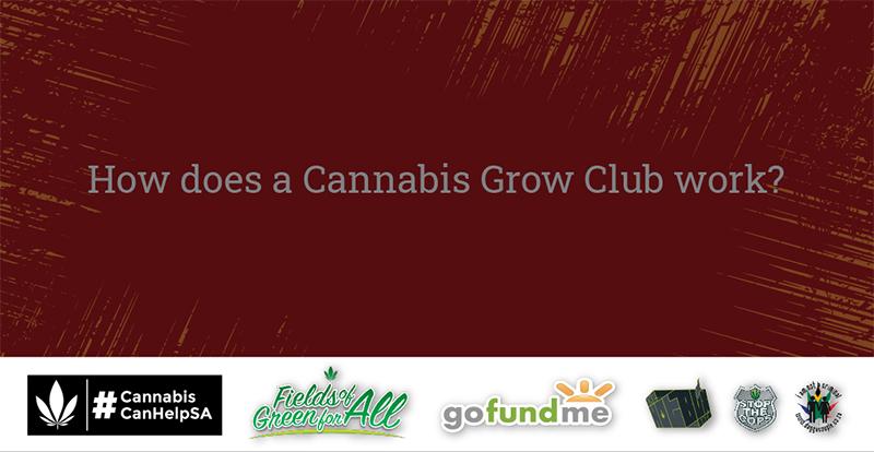 How Does a Cannabis Grow Club Work